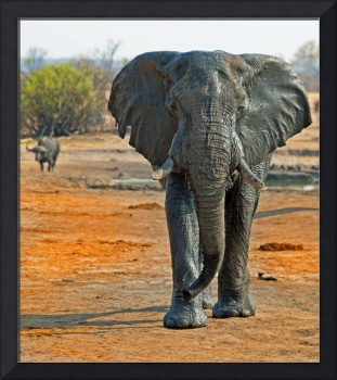Africa Animal Framed Photo