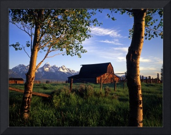 Teton Barn and Aspen Trees