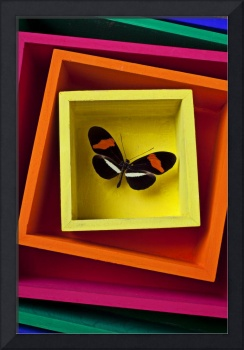 Butterfly in box