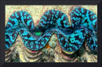 Close-up of a Giant Clam