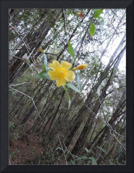 Single yellow flower in the forest