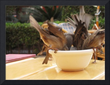 Birds fight over a bowl of peanuts