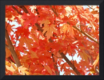 FALL LEAVES Art Prints Gifts Orange Autumn Trees