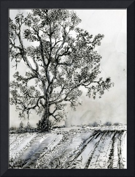 Poplar Tree In Autumn Ink Drawing by Ginette