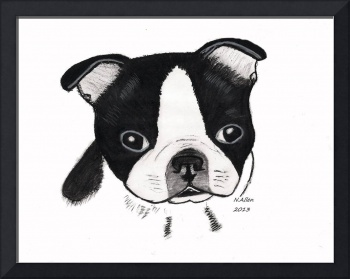 Boston Terrier Puppy, charcoal drawing