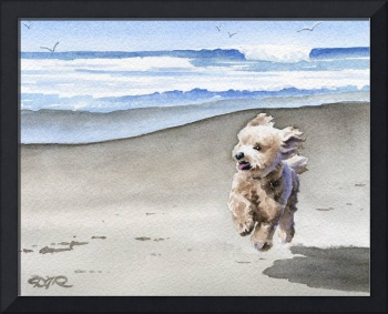 Apricot Poodle at the Beach