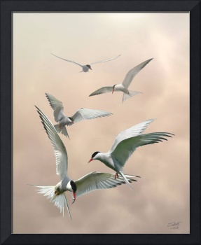 Hungry Terns on the Wing