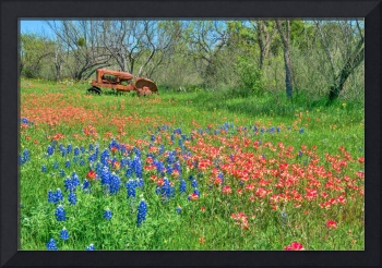 Wildflowers at the Farm