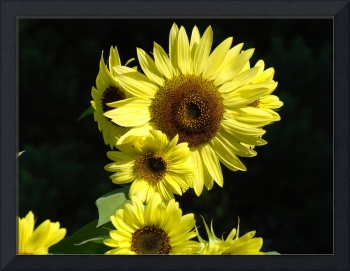 Blue Sky Sunflower Art Print Sun Flowers Baslee