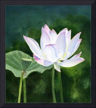 White Lotus blossom with dark abstract background