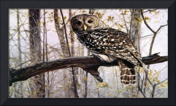 Owl Waits For The Hunt