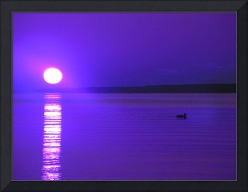 False Color Duck on the Lake