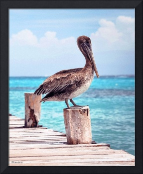 Pelican Pier Treasure Coast Florida Seascape C1