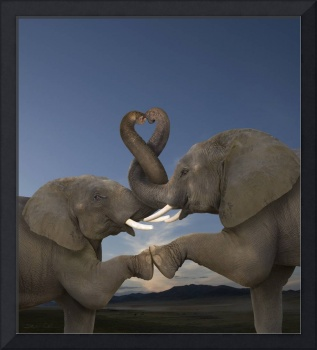 Romantic elephants, trunks intertwined in heart