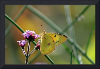 Butterfly in Autumn
