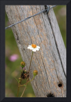 Flower Next to a Fence