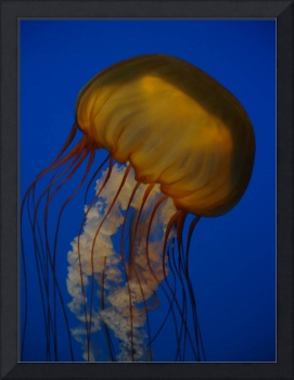 Orange Jellyfish 2