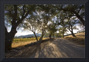 Road Leading to Venezio Winery
