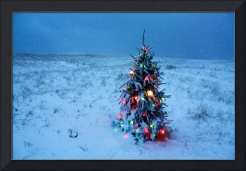 Cape Cod Christmas Tree on the Beach