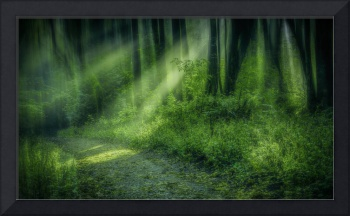 Forest Light Streams