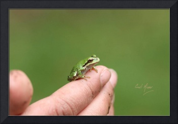 Boy and Frog 9808