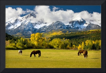 Horses In A Mountain Pasture
