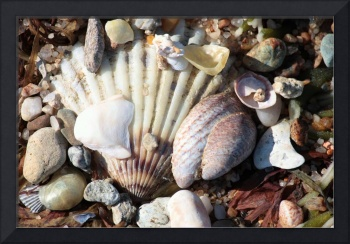 Shells along the Seashore