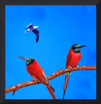 Red African Bee Eaters