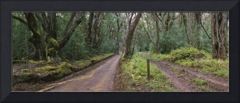Dirt road passing through a forest