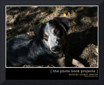 Support Animal Rescue