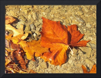 Leaves on the dirt