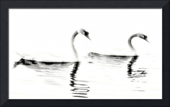 Two Swans (High Contrast)