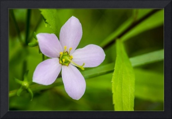 Purple Flower With Green Leaf