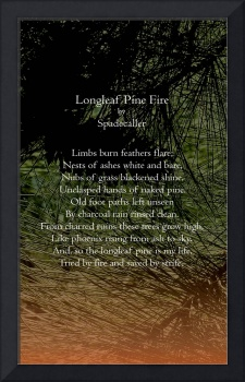Longleaf Pine Fire Poster