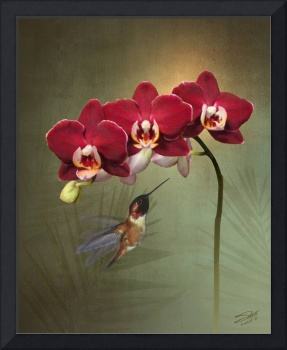Hummingbird and Crimson Orchid Blossoms