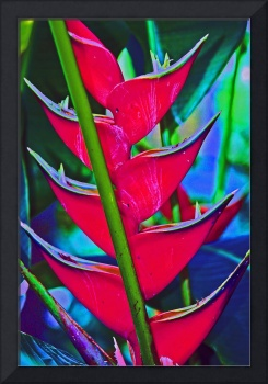 Heliconia Tropical Flower