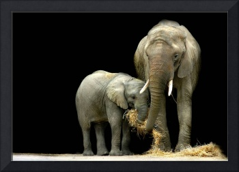 African Elephants with baby....
