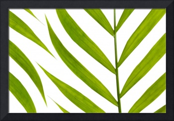 Contemporary Leaf Design - Natalie Kinnear Photogr