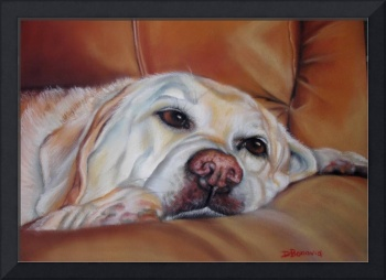 Pastel drawing of a yellow lab