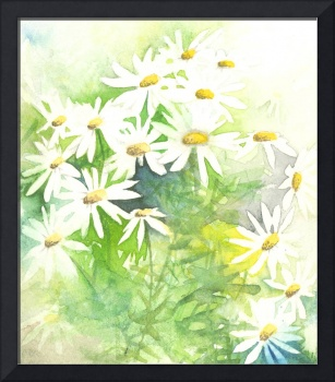 Daisys on green