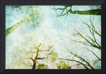 Trees Up High Abstract Photographic Art - Natalie
