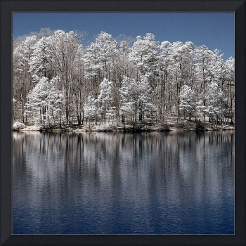 IR Lake Trees