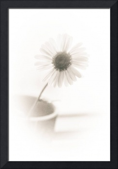 Daisy Flower On White Minimalism Art