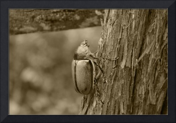 Beetle on a Log