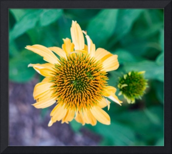 Contemporary Yellow and Green Floral Photo Art 443