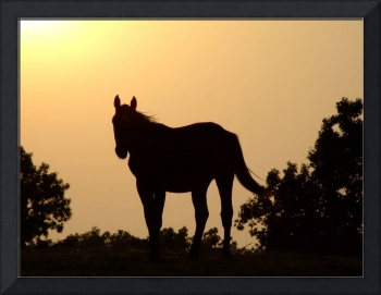 Horse Silhouette Sunset