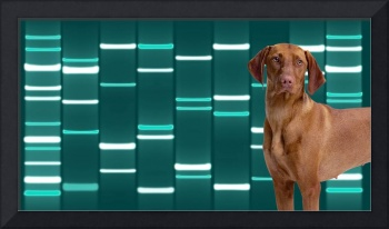 Pet Portraits DNA Art on Canvas - Teal