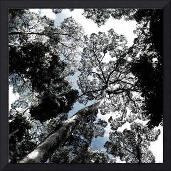 Trees - Skylight