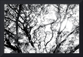 ABSTRACT ANSON ROAD TREE, #5, EDIT C