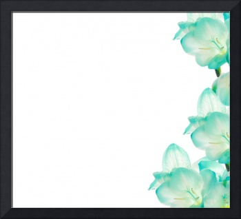 Fresia flower - border design.
